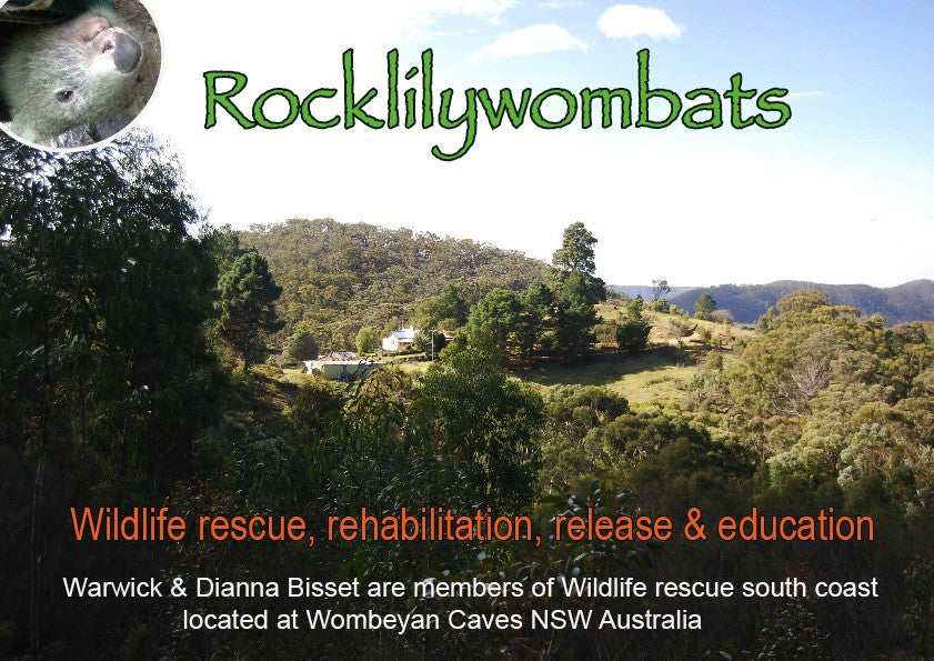 Rocklily Slideshow About us & Being a wildlife carer