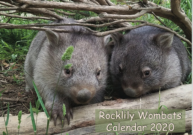 2020 Rocklilywombats Calendar Sold Out