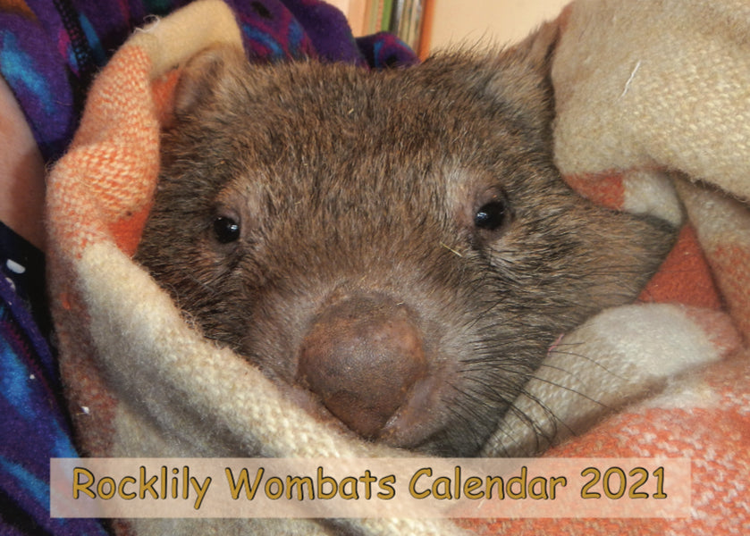 2021 Rocklily Wombat calendar now in stock