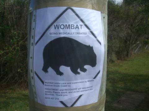 Public awareness that your treating wombat for mange