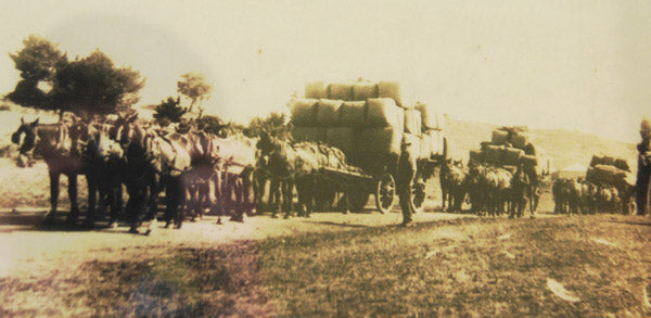 Rocklily wool on the road to Taralga 1916-17. Wool carts initially pulled by bullocks, then horses. William Lang at head of horses.