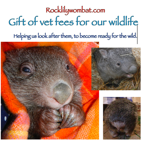 Gift of vet fees, helping us look after them.