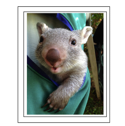 Wiggles the wombat. No W3