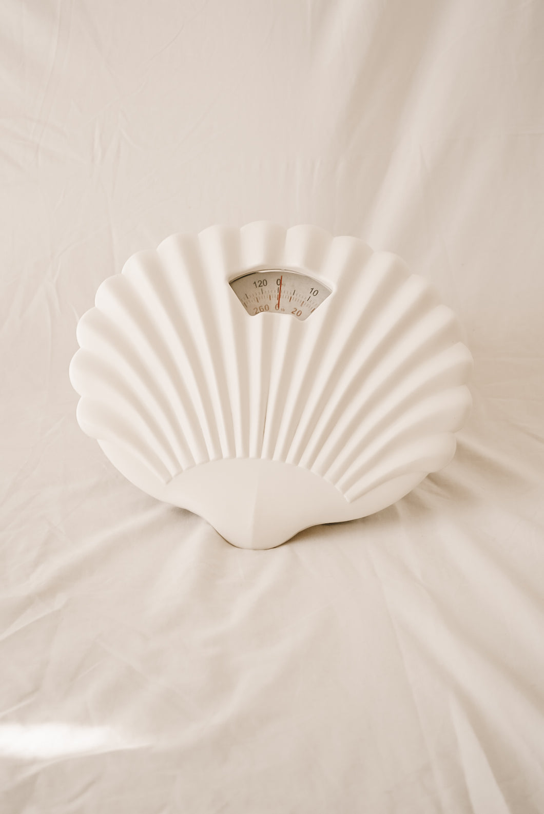 scallop shell scales