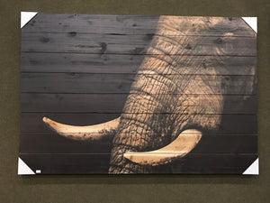 Elephant tusks on planks