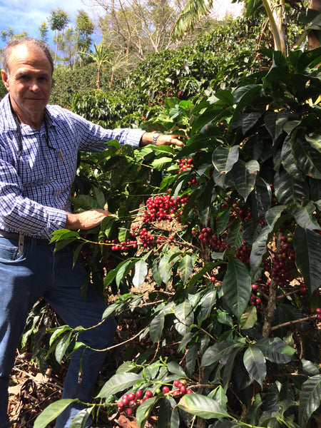 coffee farmer next to coffee plant