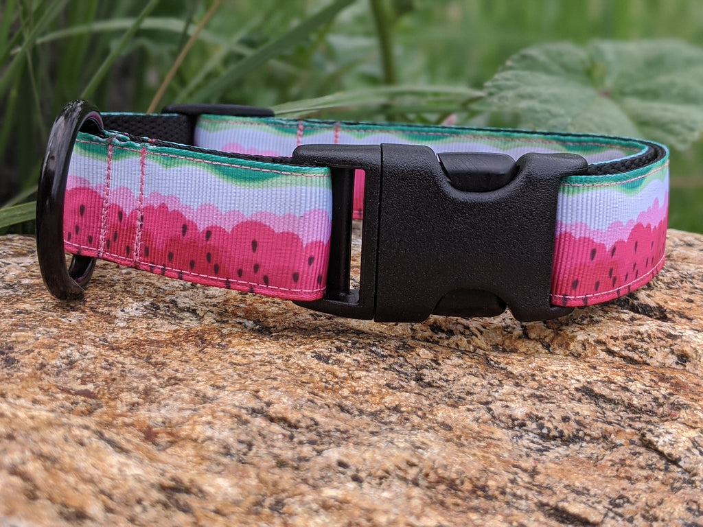 Water Colour Watermelon Dog Collar