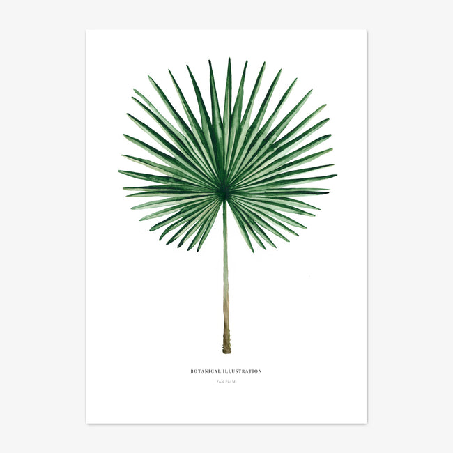 "Art Print ""Fan Palm"""