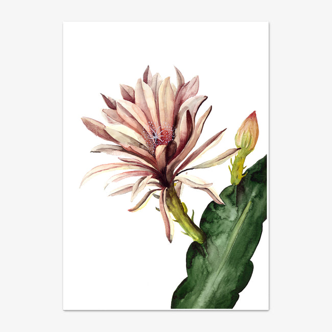 "Postkarte ""Red Cactus Flower"""