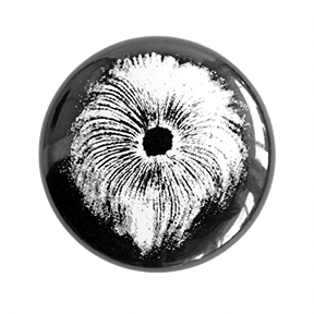 Olde Spore Print Button - Chthaeus Press
