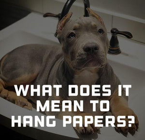 What does it mean to hang papers on a dog?