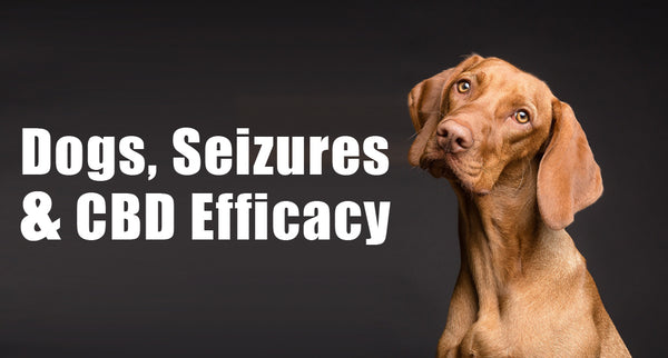 Dogs, Seizures & CBD Efficacy