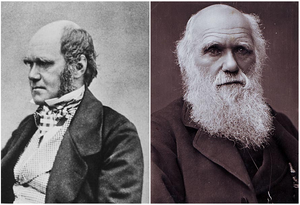 Great Beards Throughout History: Charles Darwin