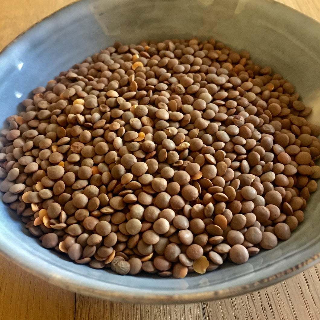 Brown Lentils in bowl