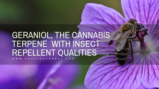 GERANIOL, THE CANNABIS TERPENE  WITH INSECT REPELLENT QUALITIES