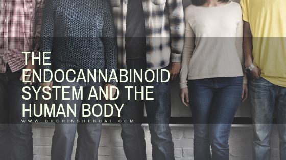 THE ENDOCANNABINOID SYSTEM AND THE HUMAN BODY
