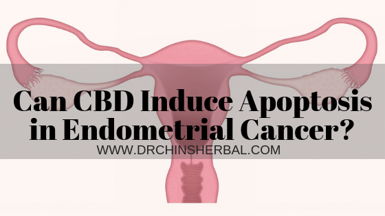 Can CBD Induce Apoptosis in Endometrial Cancer?