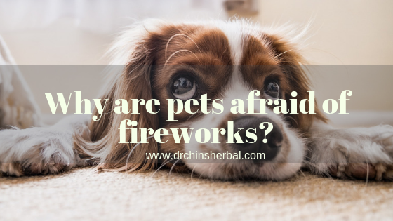 Why are pets afraid of fireworks?