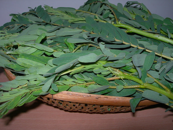 Organic Agathi Leaves (Sesbania)