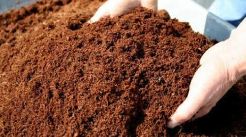 Organic Coco Peat Powder