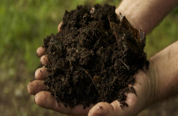 Organic Cow Dung Compost