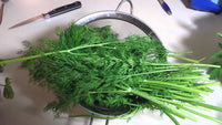 Organic Dill Leaves