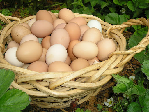Organic Country Egg Free Range (pack of 6)*