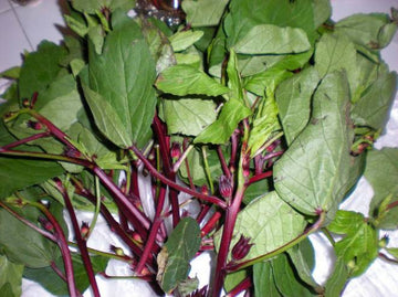 Organic Gongura Leaves