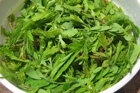 Organic Tender Tamarind Leaves