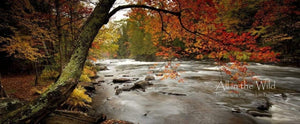 Canada's Autumn Hues All in the Wild Panoramic / Acrylic / 28x67 Photo