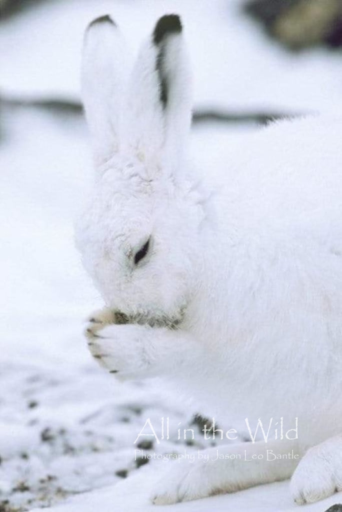 A Hare with a Prayer