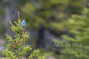All in the Wild Photo Regular / Natural Wood Frame / 5x7 Catch of the Eye