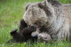 Everyone Needs a Bear Tickle All in the Wild Regular / Natural Wood Frame / 5x7 Photo