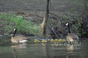 All in the Wild Photo Regular / Natural Wood Frame / 5x7 Family Time