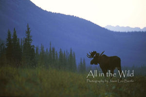 Mountain Majesty All in the Wild Regular / Natural Wood Frame / 5x7 Photo