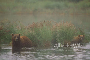 Nice Bears All in the Wild Regular / Natural Wood Frame / 5x7 Photo