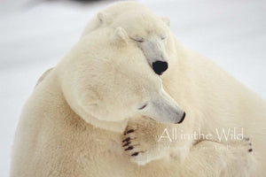 Polar Hug All in the Wild Regular / Natural Wood Frame / 5x7 Photo