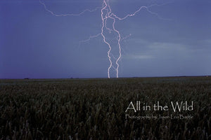 Prairie Storm All in the Wild Regular / Natural Wood Frame / 5x7 Photo