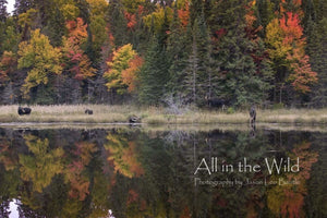 Reflections of Fall All in the Wild Regular / Natural Wood Frame / 5x7 Photo
