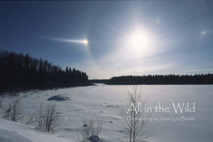 Sundogs All in the Wild Regular / Natural Wood Frame / 5x7 Photo