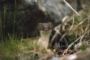 Wide Eyed All in the Wild Regular / Natural Wood Frame / 5x7 Photo