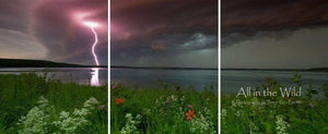 Northern Energy All in the Wild Triptych / Acrylic / 24x57 Photo