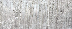 Winter's Calm All in the Wild Triptych / Acrylic / 24x57 Photo