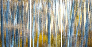 Daydreaming All in the Wild Triptych / Acrylic / 44x84 Photo