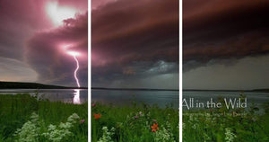 Northern Energy All in the Wild Triptych / Acrylic / 44x84 Photo