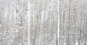 Winter's Calm All in the Wild Triptych / Acrylic / 44x84 Photo