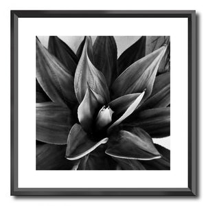Black Frame Agave Print Prints - Dusty Sea