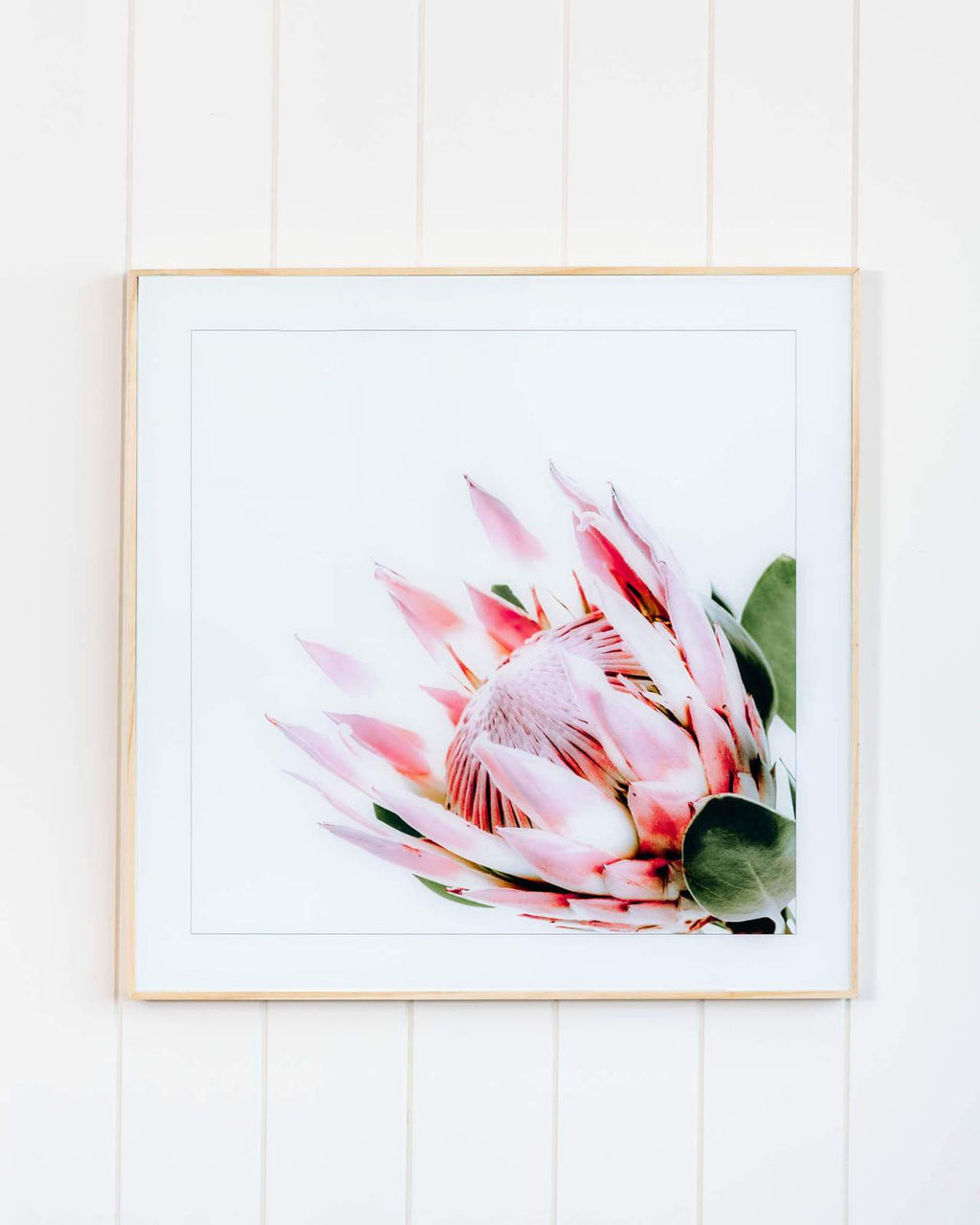 King Protea Bright Framed Print Prints - Dusty Sea