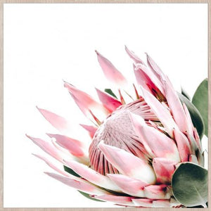 King Protea Framed Print Prints - Dusty Sea