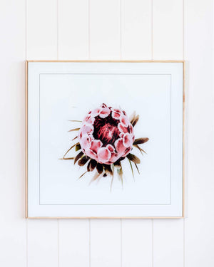 Protea Spiral Framed Print Prints - Dusty Sea